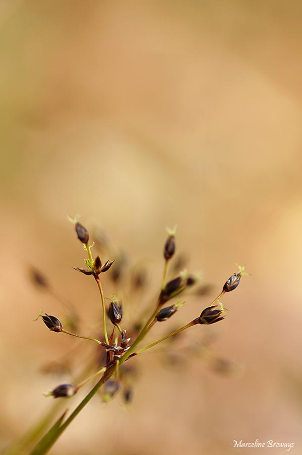 fleur printanière