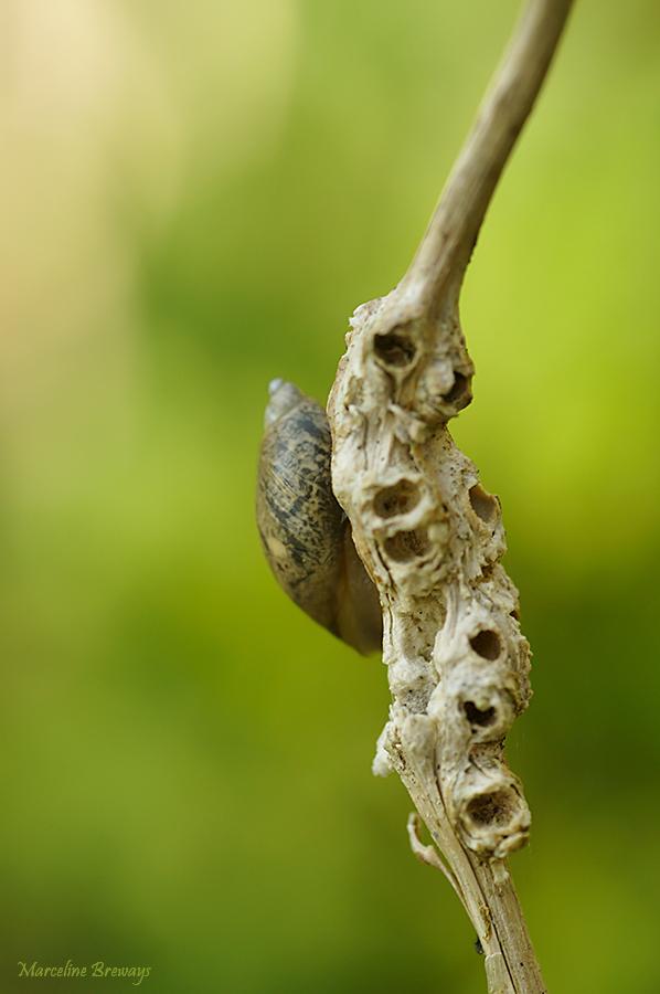 escargot qui sommeille