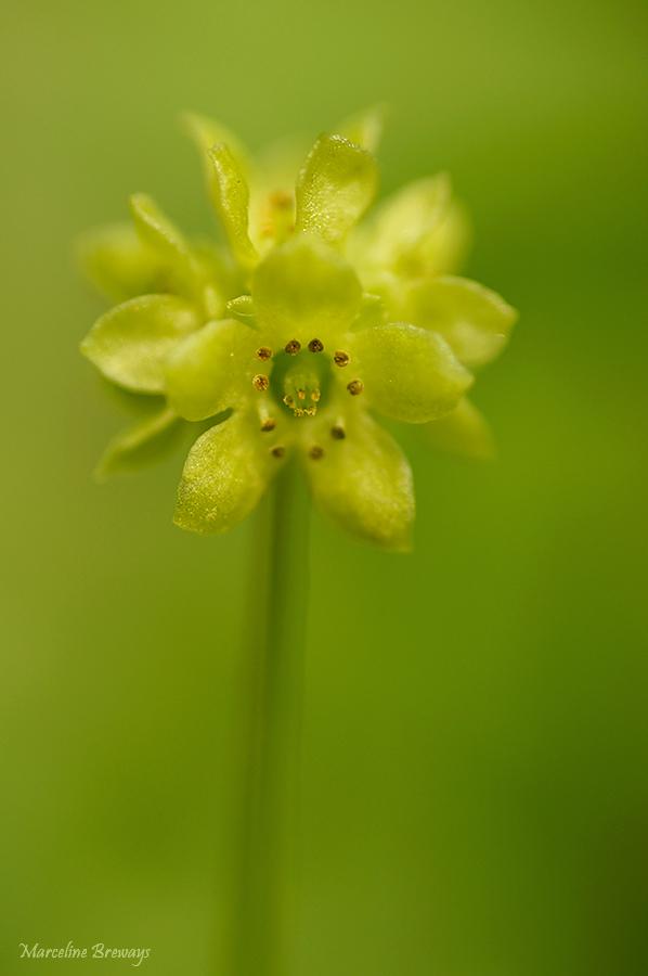 petite fleur inconnue