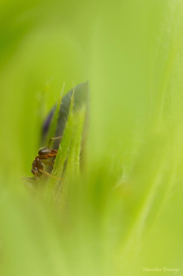 une petite fourmi