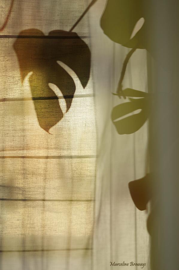 ombre d'une plante