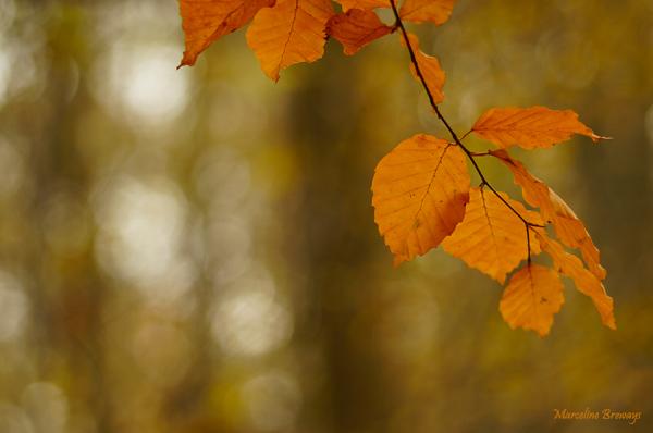 bois en automne
