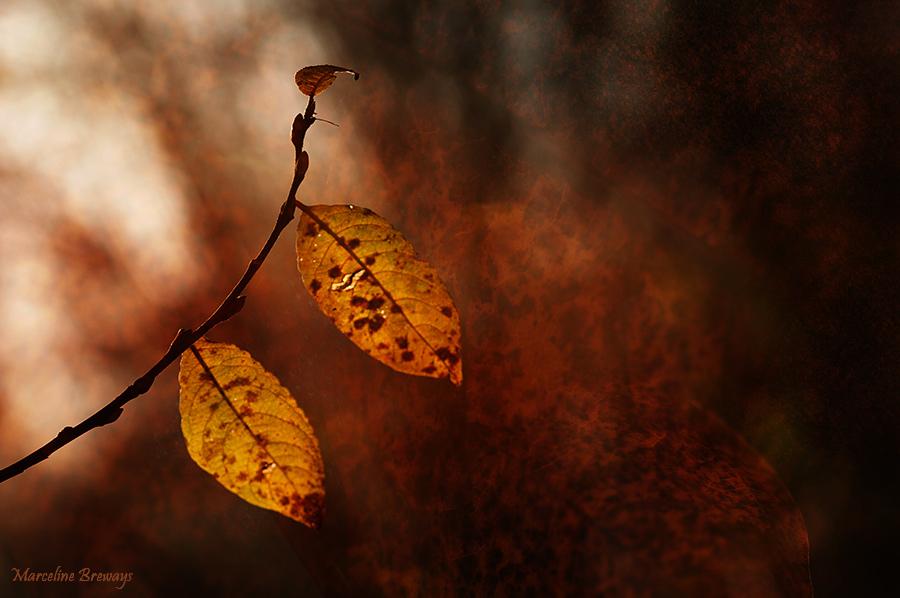 deux feuilles d'automne