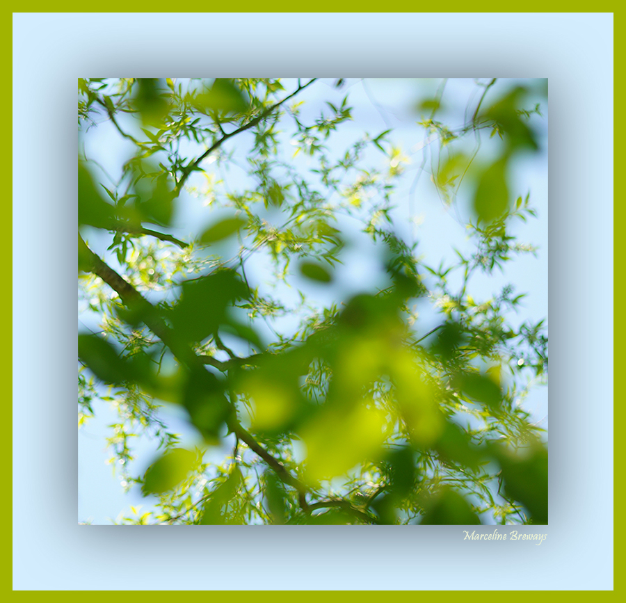 ciel d 'arbres