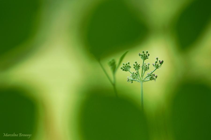 hautes herbes
