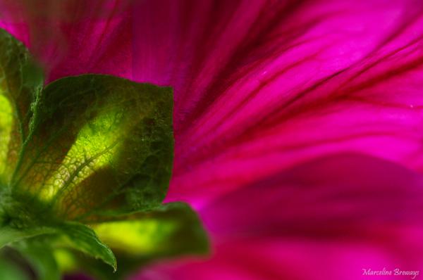 rose contraste coloré