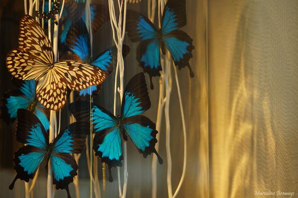 papillons de lumière