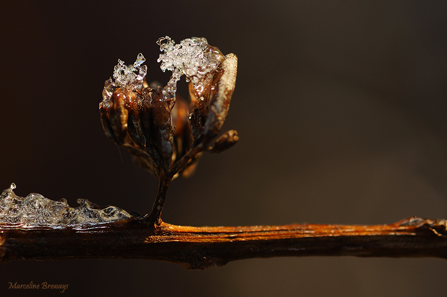 neige sur une branche