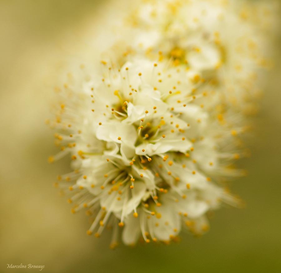 arbre printanier en fleurs