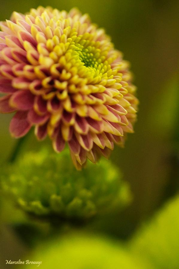fleur de bouquet