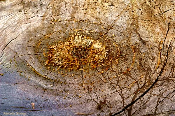 bois branche racine