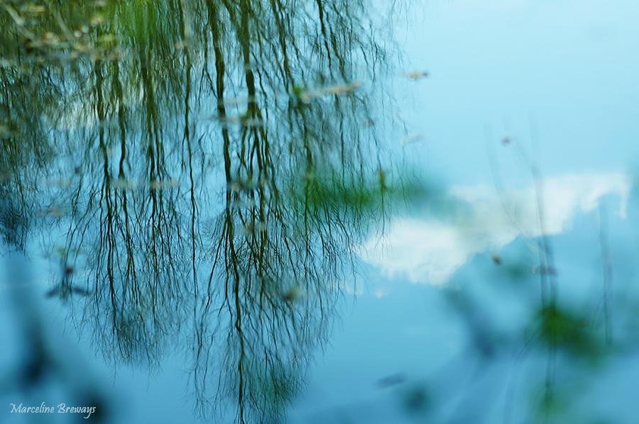 reflet d'arbres au printemps
