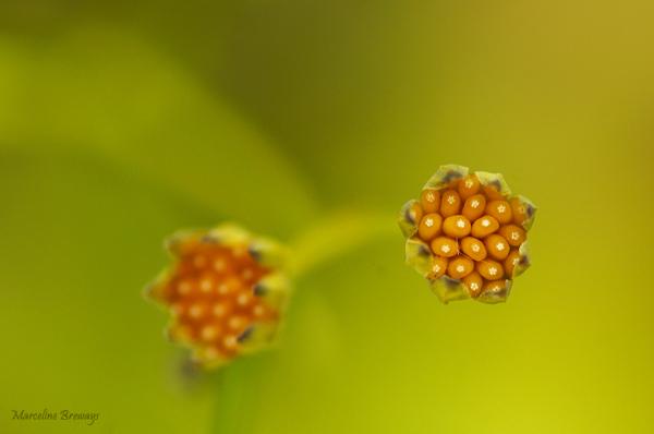 graine de fleurs