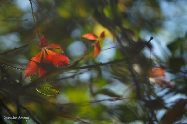 feuillage automne