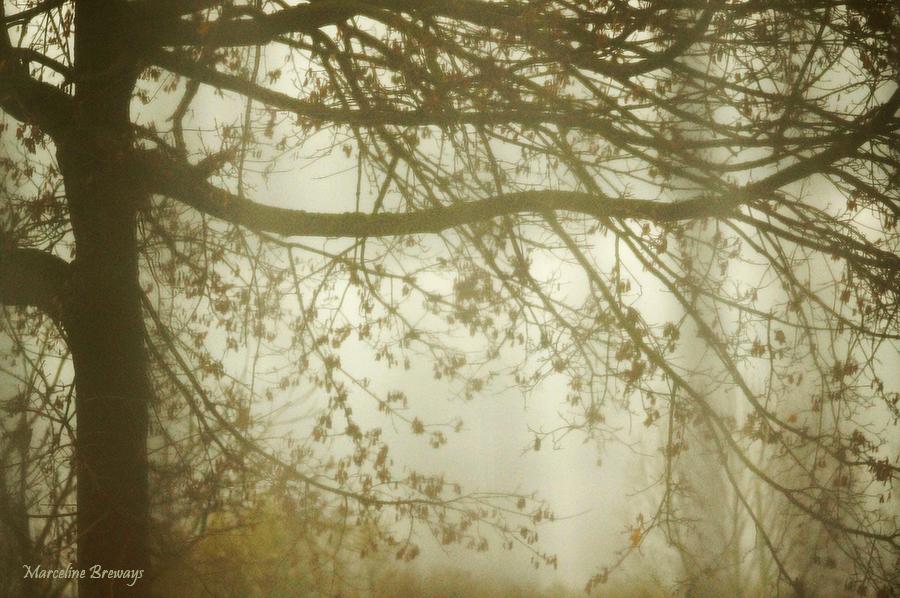 arbre d'automne