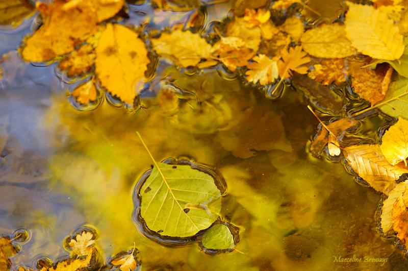 feuille d'arbre en automne