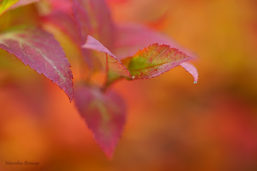 feuillage rouge automne