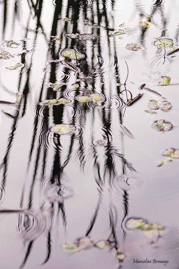 reflet d'hiver