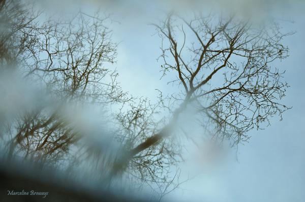 reflet d'arbres en hiver