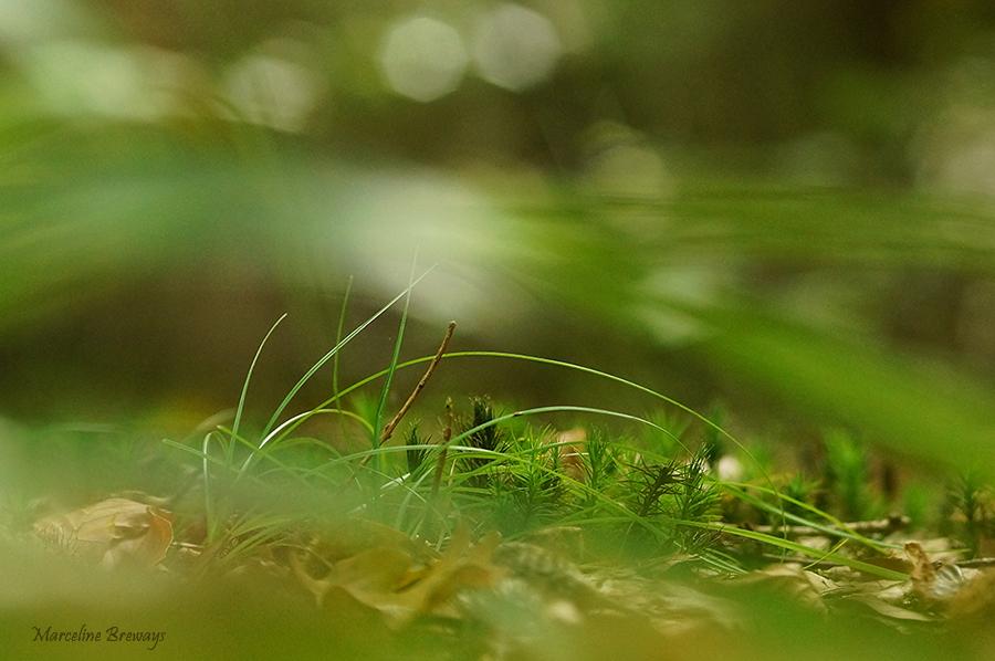 mousse en forêt