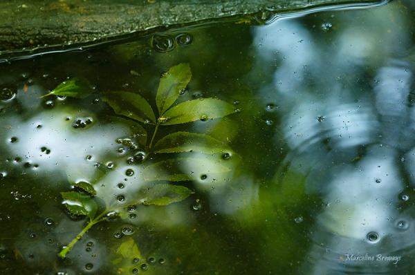 feuille d'automne flottant
