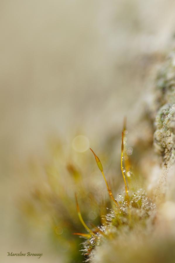 pédicelles de mousse en hiver
