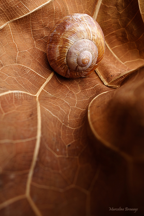 escargot feuille arbre automne