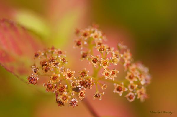 arbuste en couleur d'automne