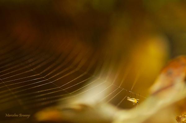insecte dans toile araignée