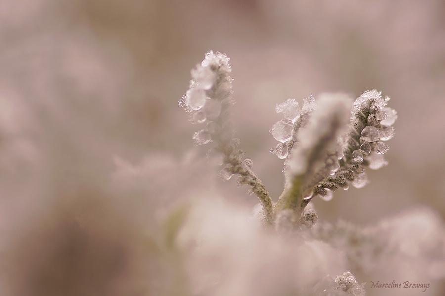 givre en hiver