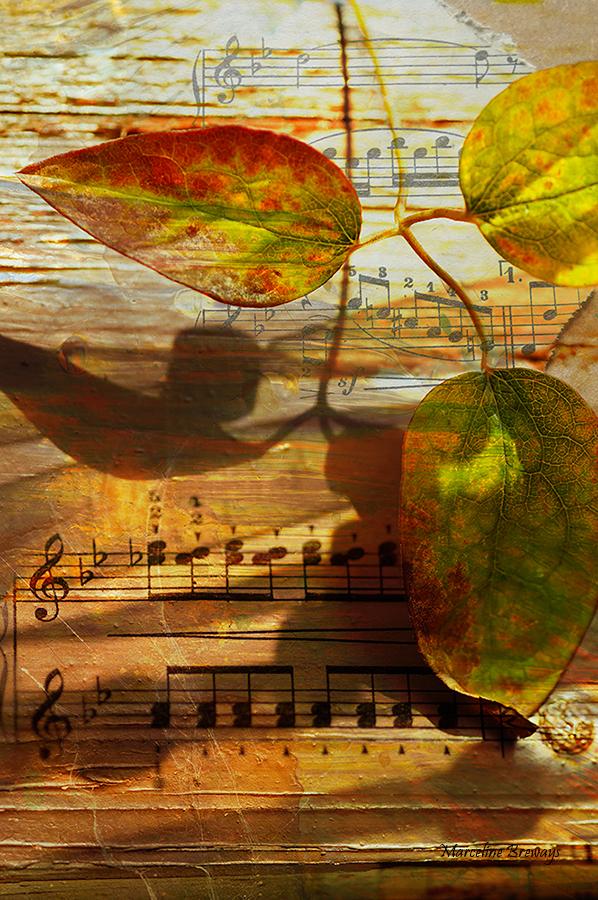 harmonie de la musique