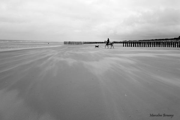 cheval sur plage