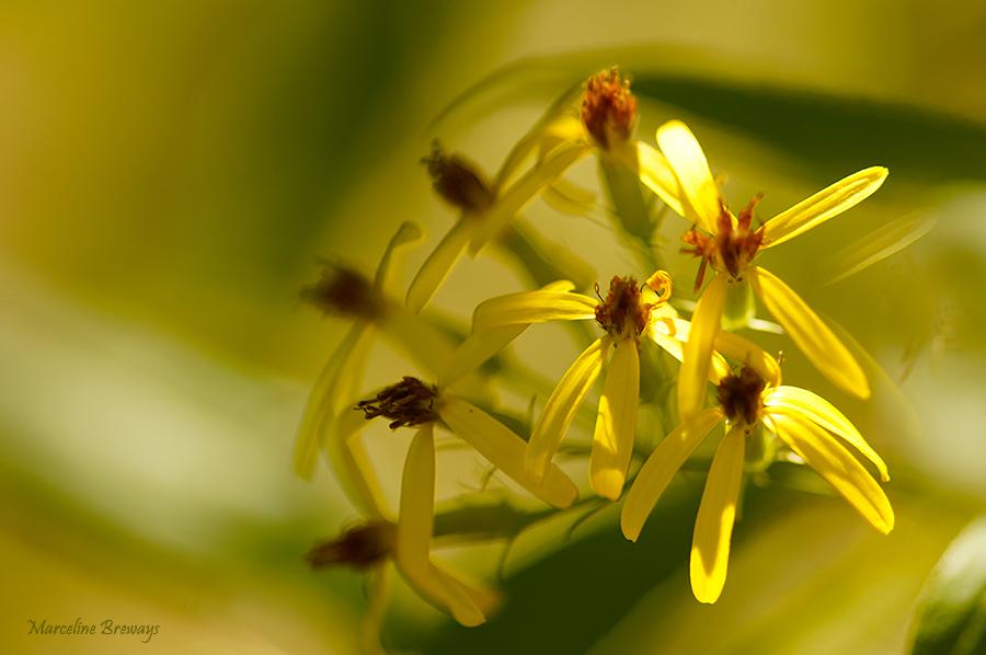 fleur jaune soleil