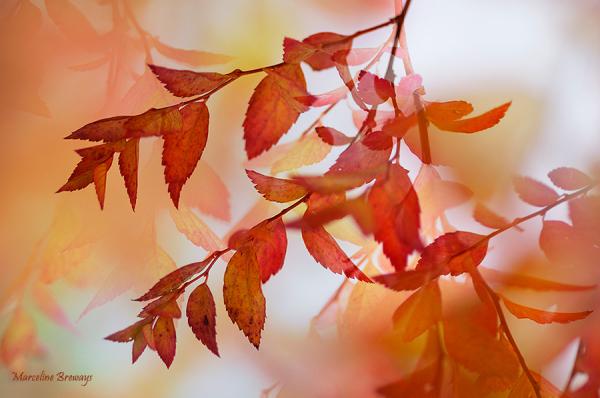 feuillage rouge d'automne