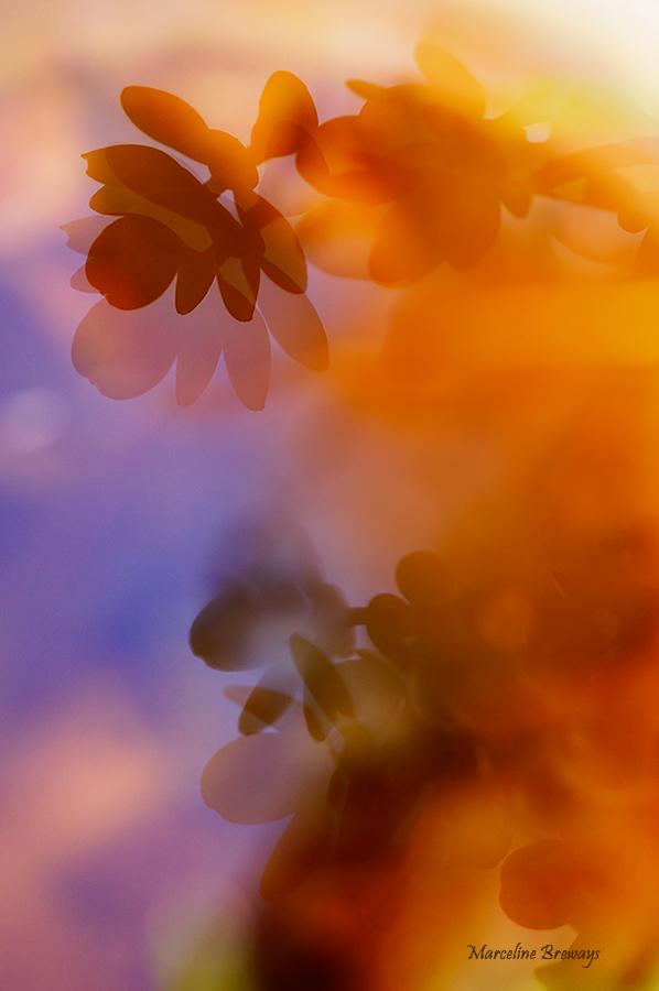 fleurs et feuillage