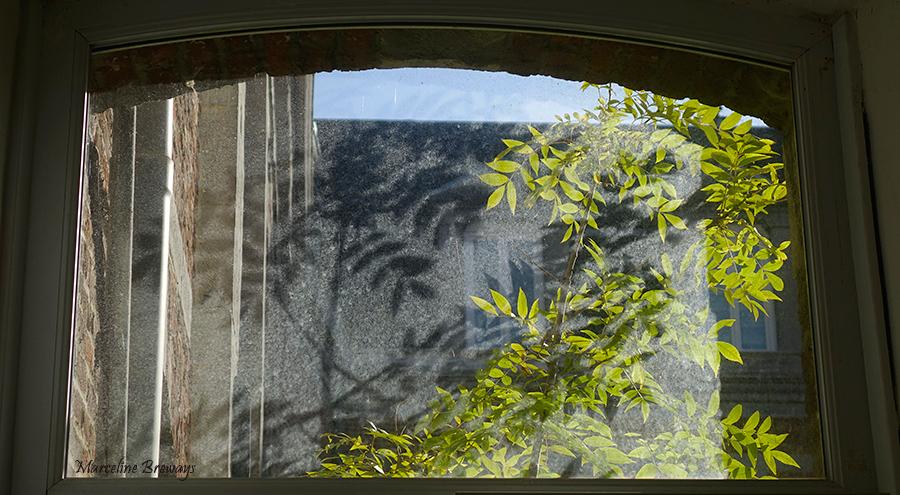 plante et son reflet