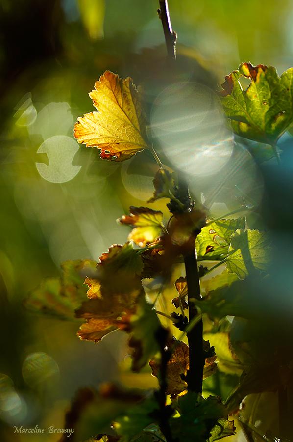 quand les feuilles tombent et meurent