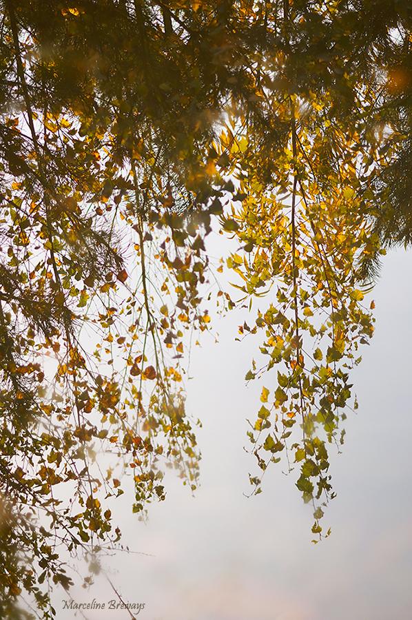 le reflet des arbres d'une journée automnale