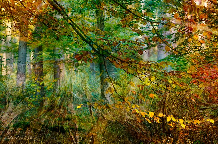 arbre coloré en automne