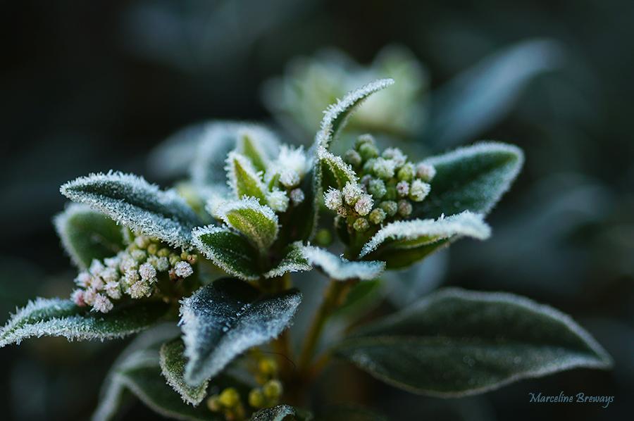 Fleur d'hiver..