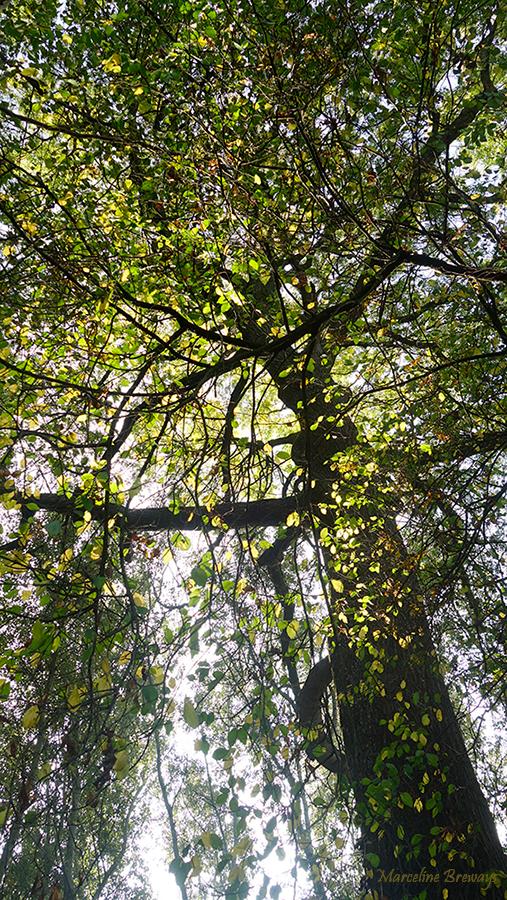 sous le feuillage de l'arbre