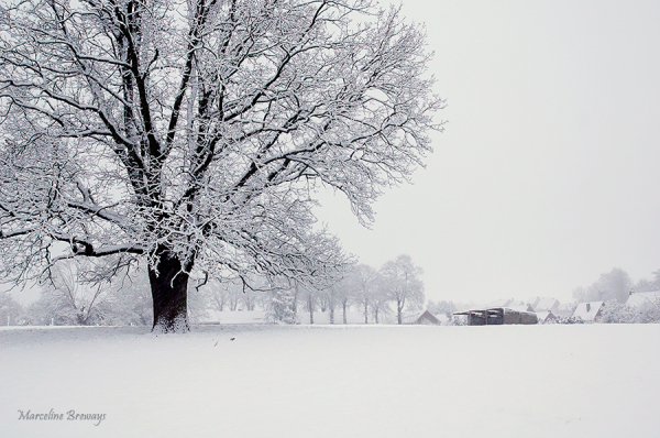 arbre sous la neige en hiver