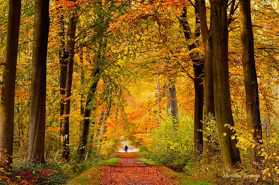 chemin forestier en automne