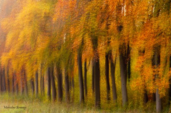 rangée d'arbres en automne