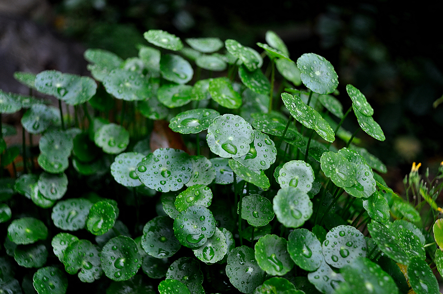 A Lovely Green