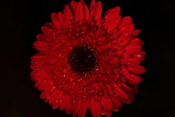 Lovely  flowers*