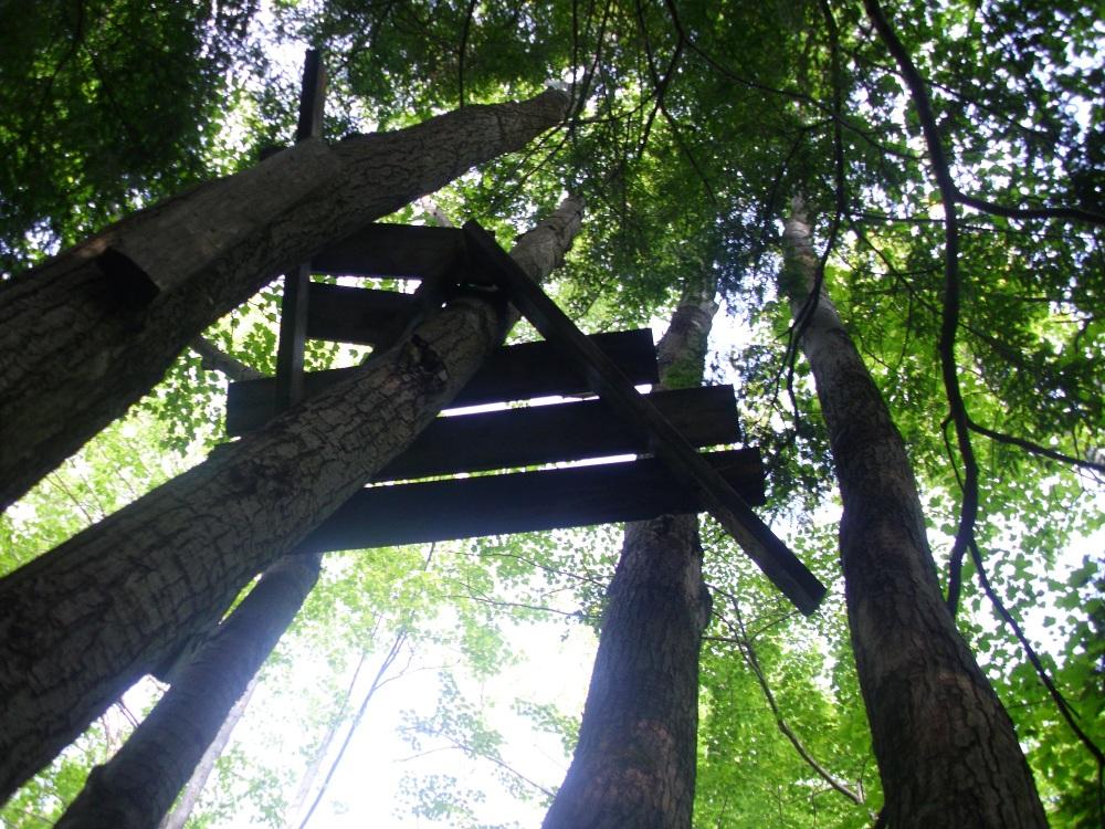 Treestand and Sun