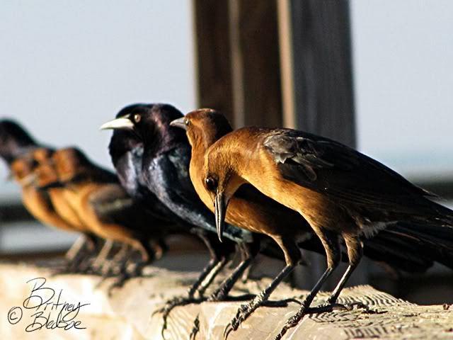 bird photo from lake apopka, florida
