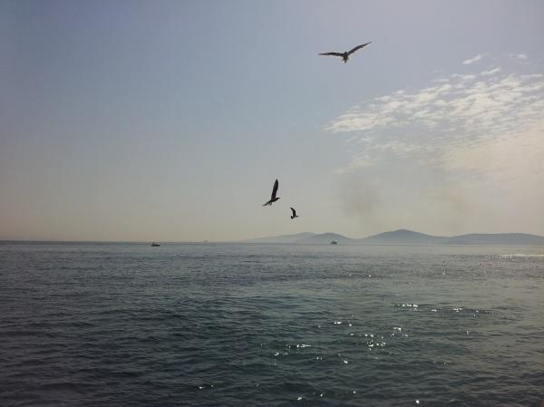 پرندگان آبی