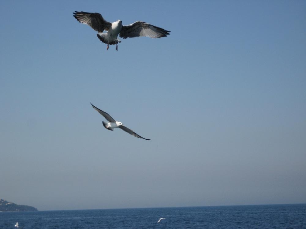 زوج پرنده